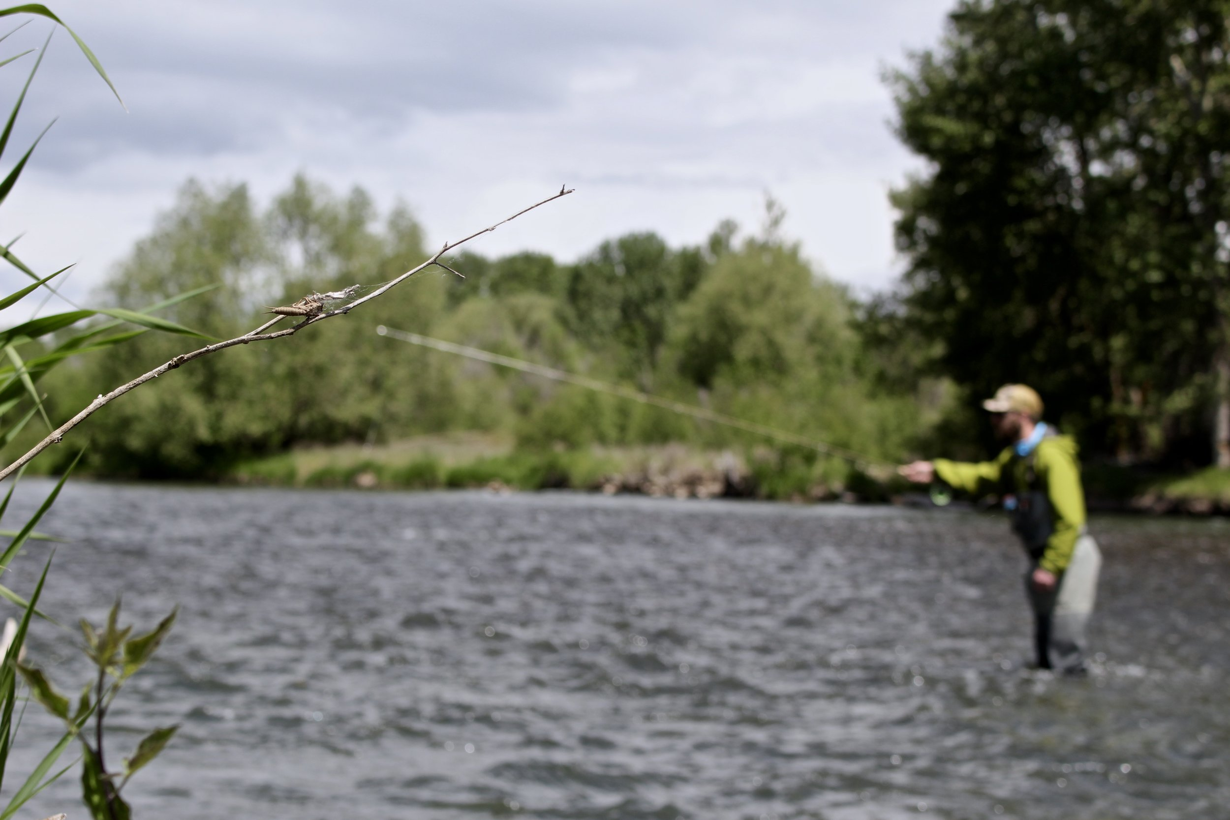 Alex Tightline nymphing the Yakima River