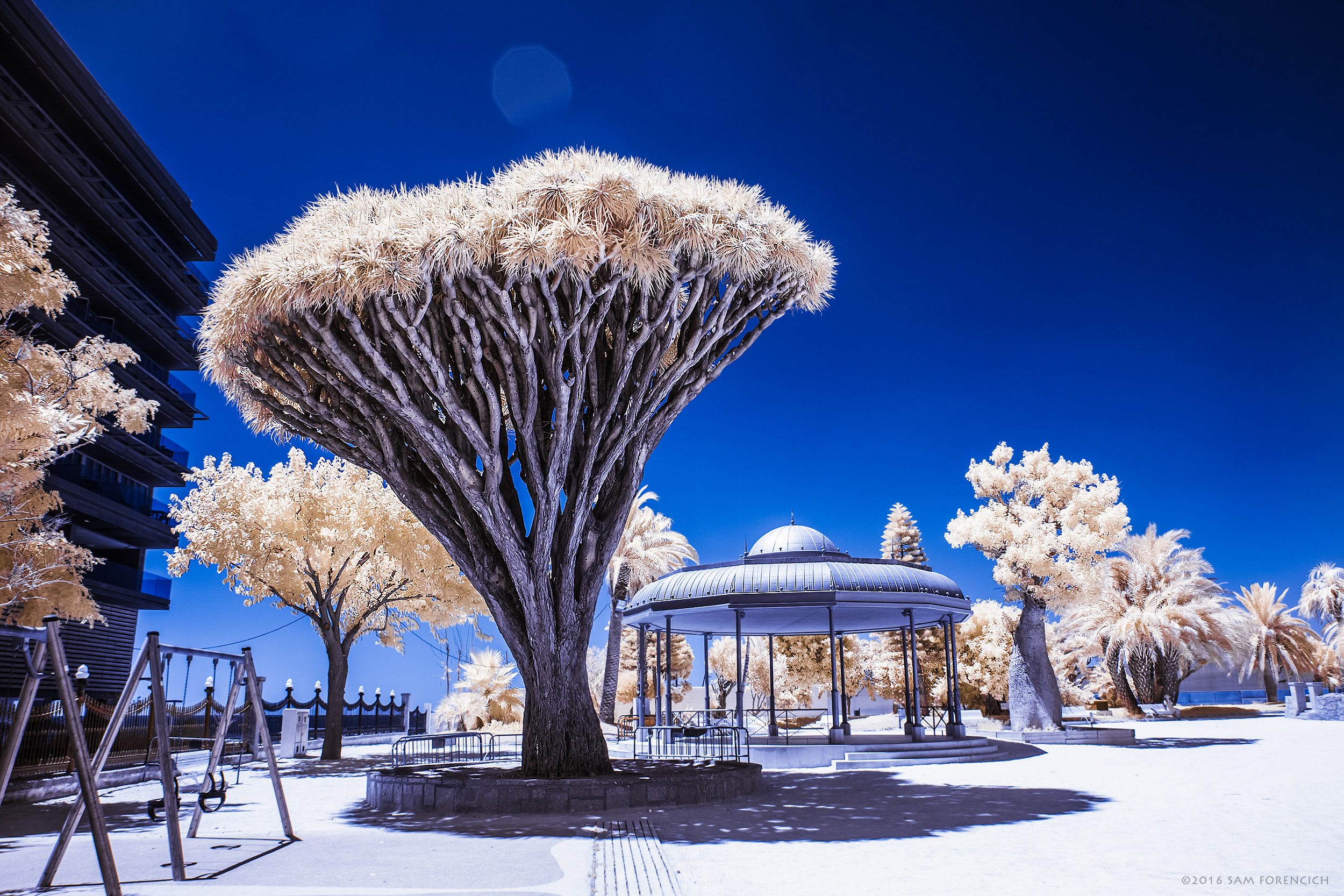 A Dragon Tree (Dracaena draco) overlooks the playground area of the Parque Genoves in the Andalusian city of Cadiz, Spain. Channel swapped infrared, IR converted Canon 5D Mark II. © 2015 Sam Forencich