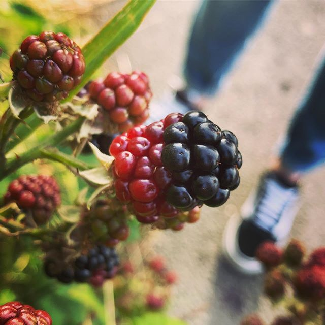 🍃 💐 🍇 Getting Into Nature 🌲 🐴 blackberries had spiders on em 🌞 🌓 that's nature for you 🍃 🌷 🍇