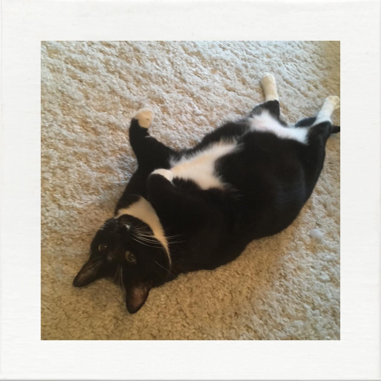 sarasota cat sitter