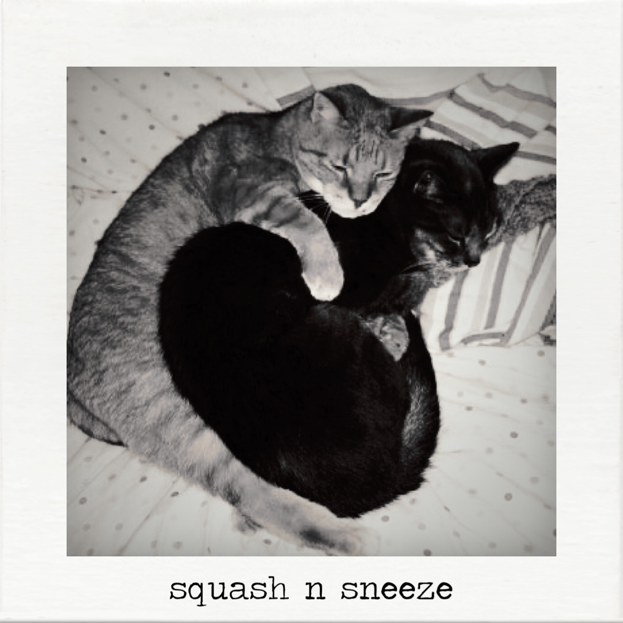 my old boys squash and sneeze