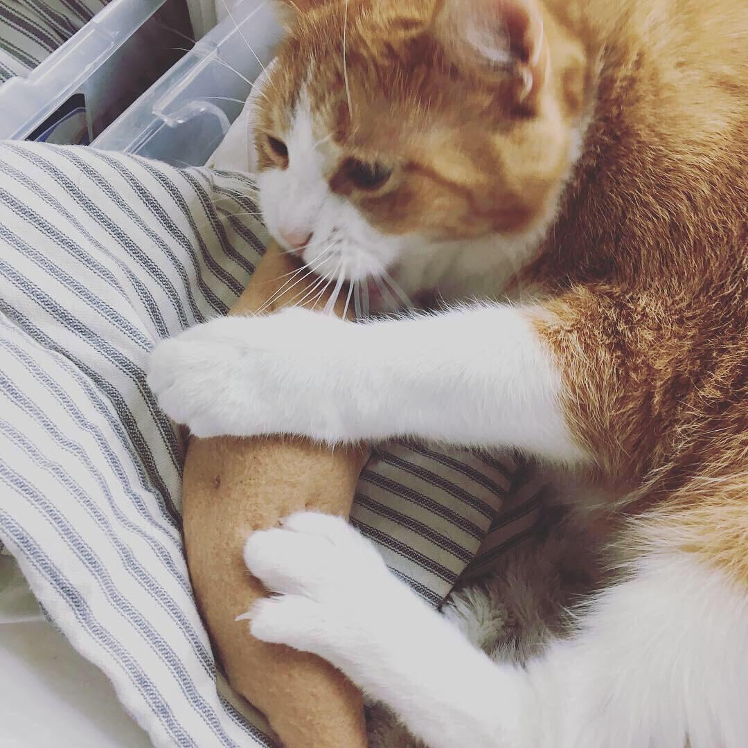 catnip sweet potato