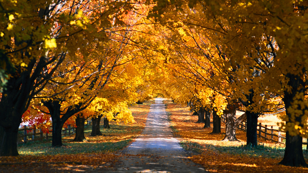 fall-trees-along-the-road-1024x576-hd-wallpapers.co.jpg
