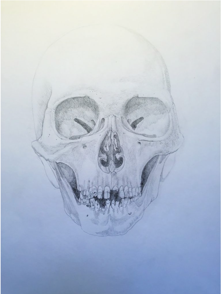 Skull, by Ippy Patterson