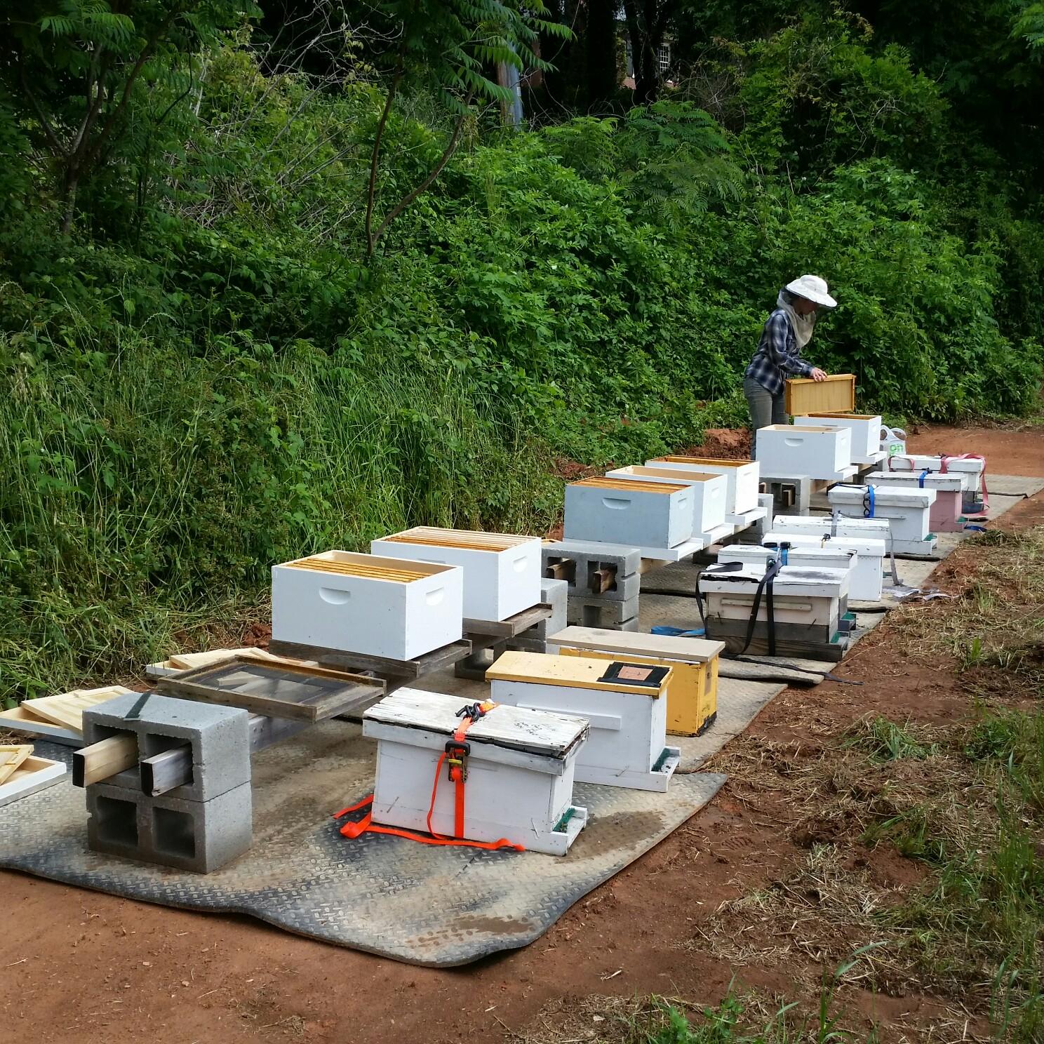 freewheel bees.JPG