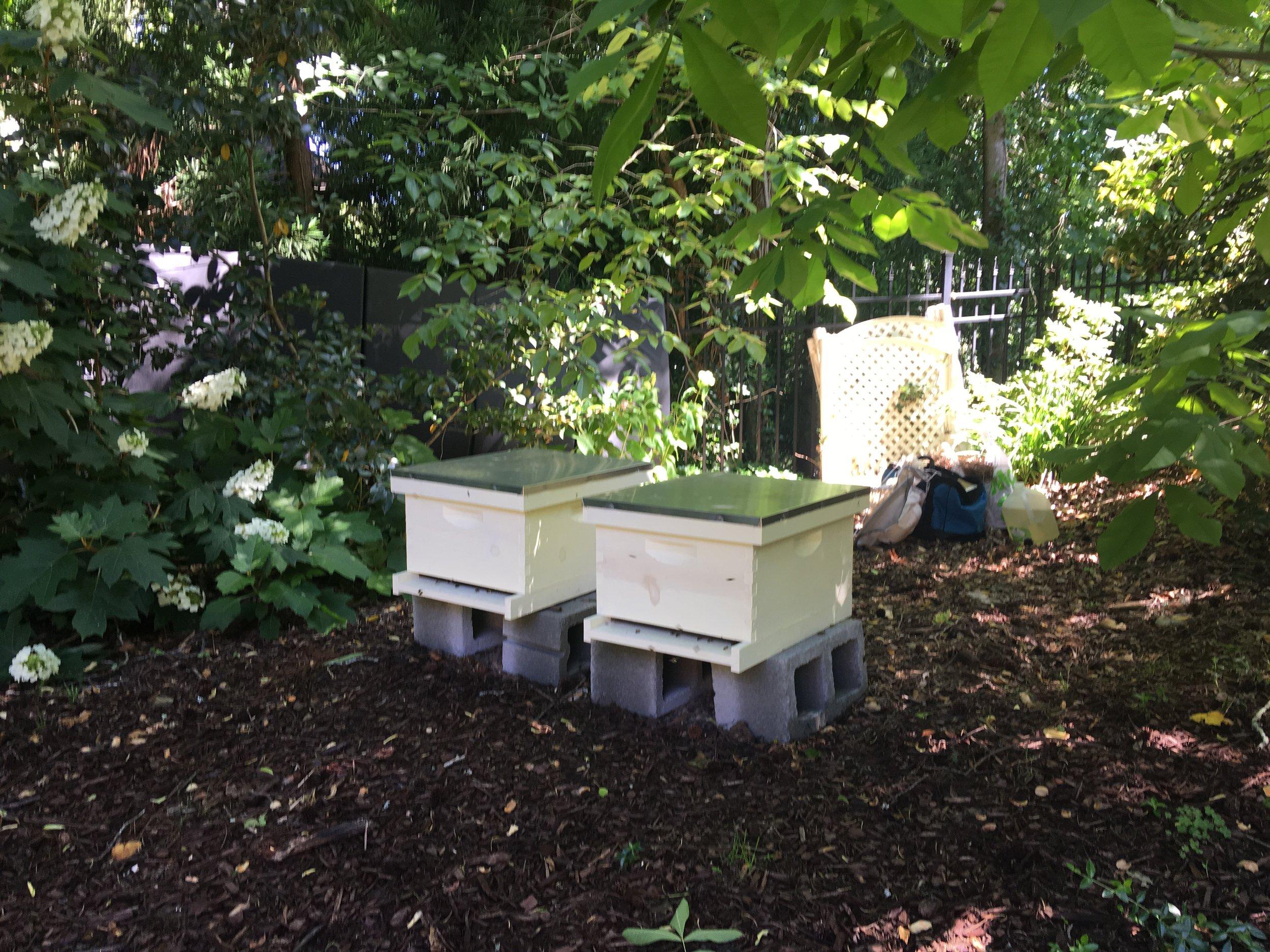 Rays bees.JPG