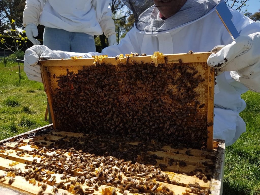 hive inspection.jpg