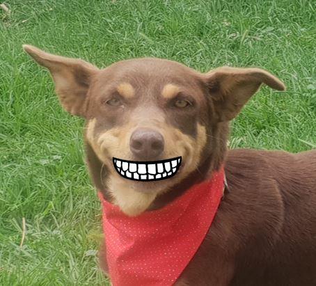 Rango smile.jpg