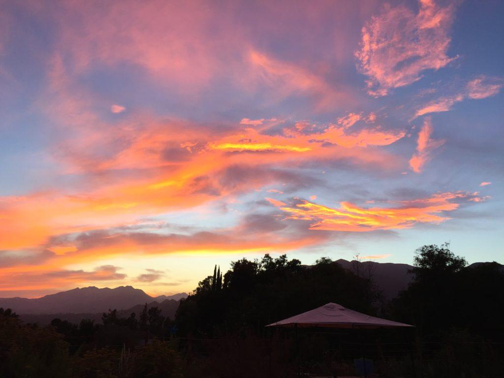 garden sunset.jpg