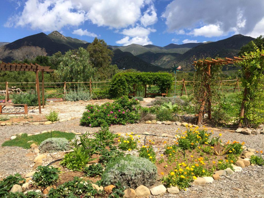 EIH Garden wideview2.jpg