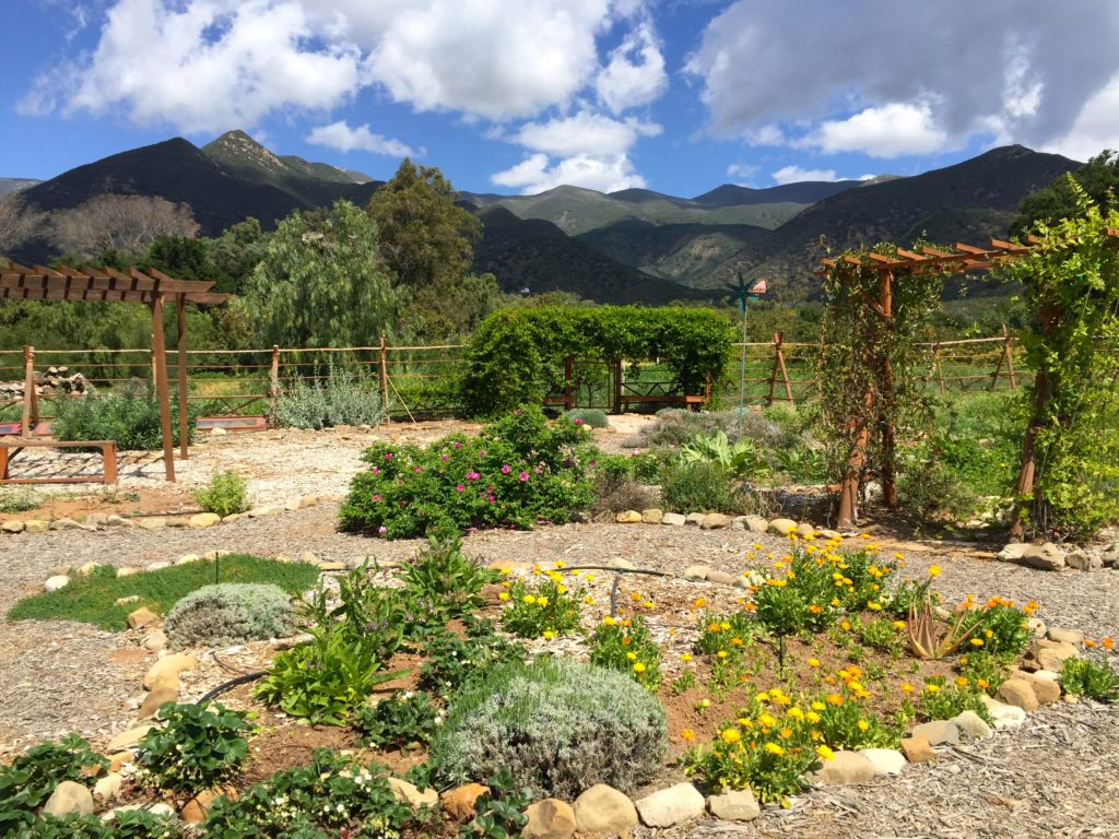 EIH Garden wideview2.jpg