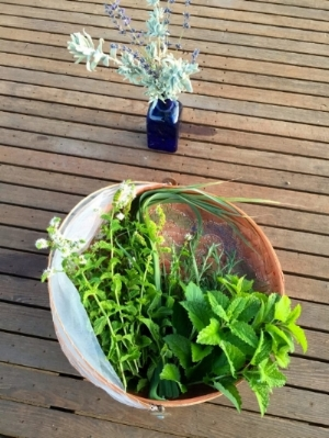 herbs in basket on table.jpg