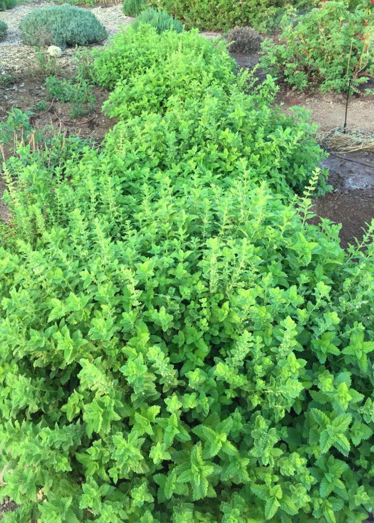 Garden green.jpg