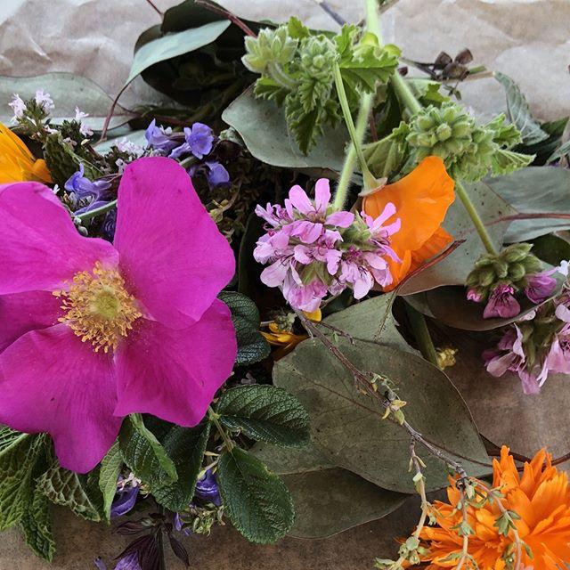 Bouquets for days. ⠀ ⠀ ⠀ ⠀ #earthislandherbs #garden #gardening #plants #herbs #herbgarden #herbalmedicine #herbschool #flowers #health #communityhealth #healing #ojai #ojaischoolofherbalstudies #socal #nature #greenspace #gardendesign #gardenlife #seeds #seedsaving