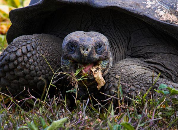 Land Tortoise.jpg