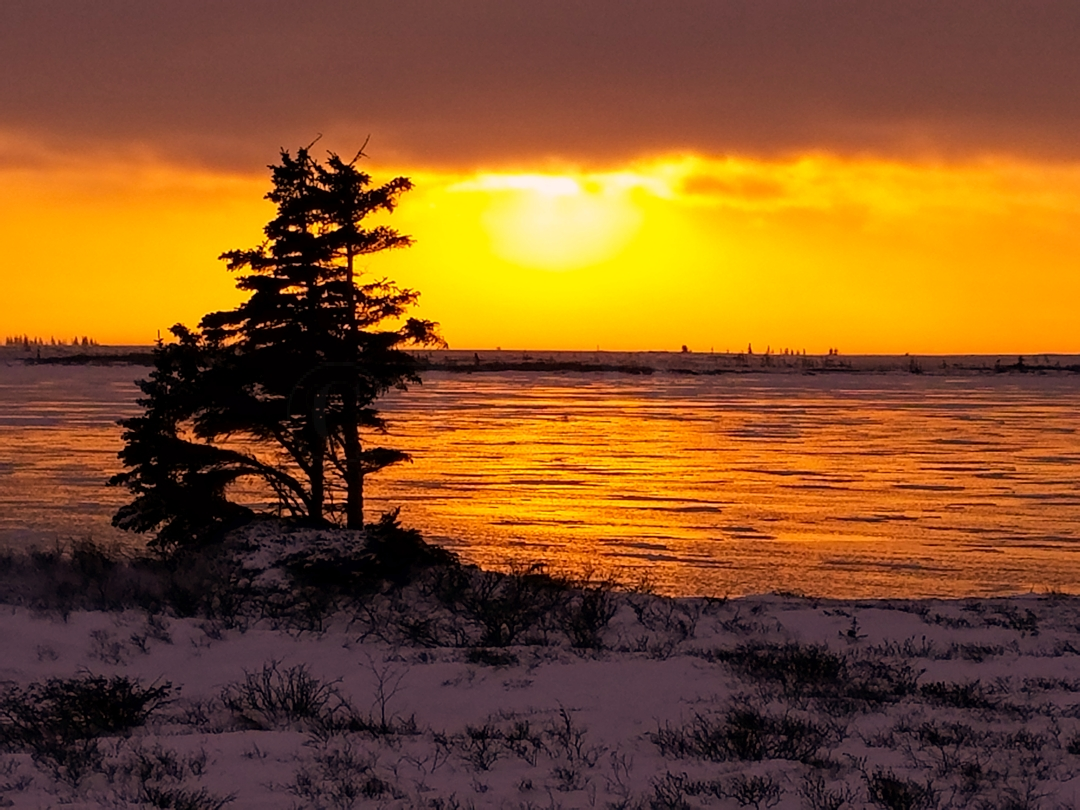 Tundra sunset.jpg