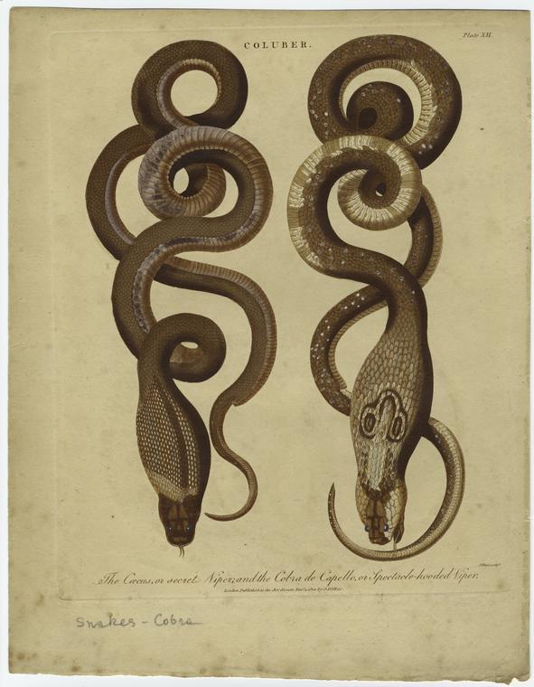The Secret Viper, 1801