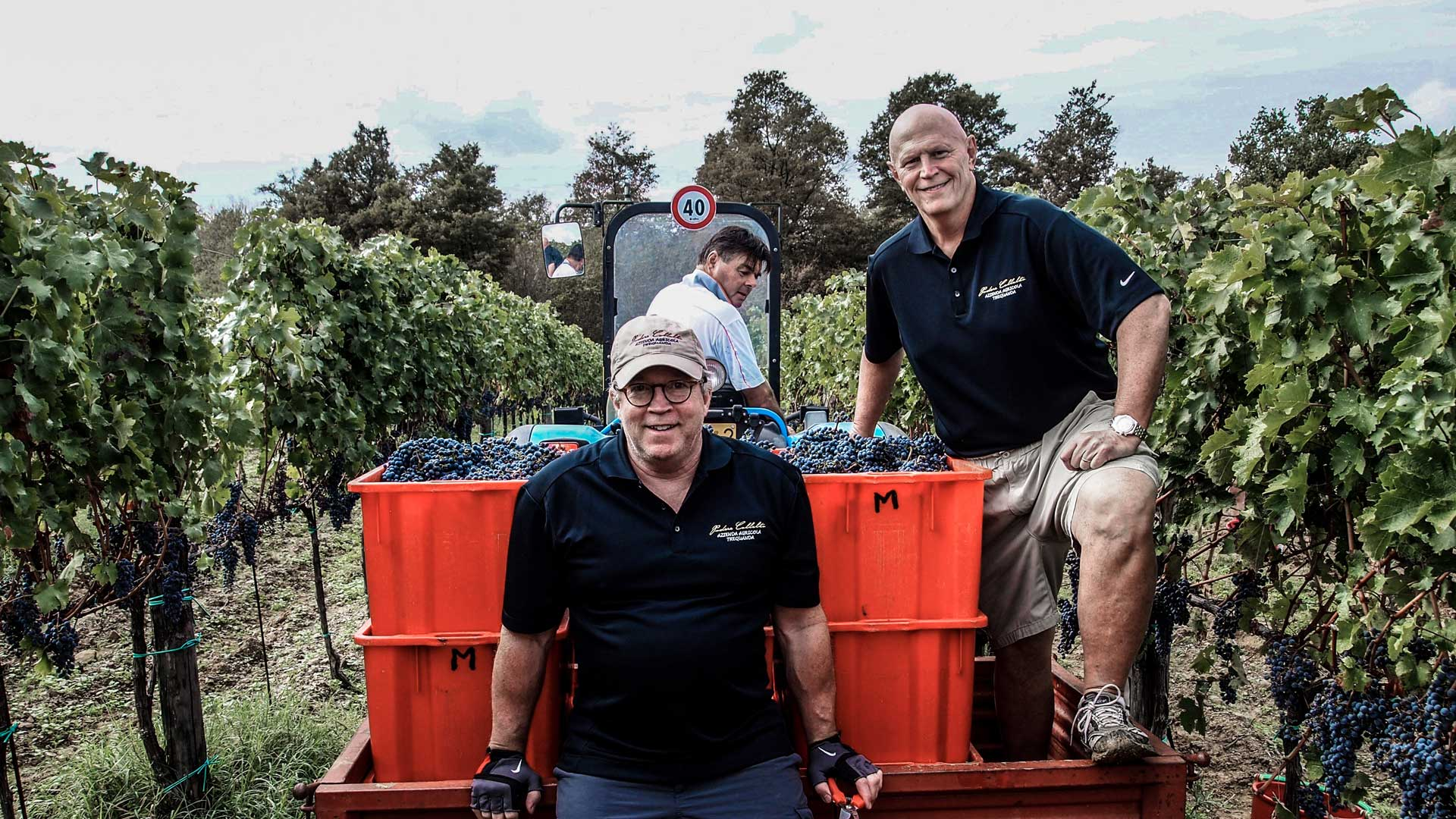 Copy of Harvesting grapes with our friends and family