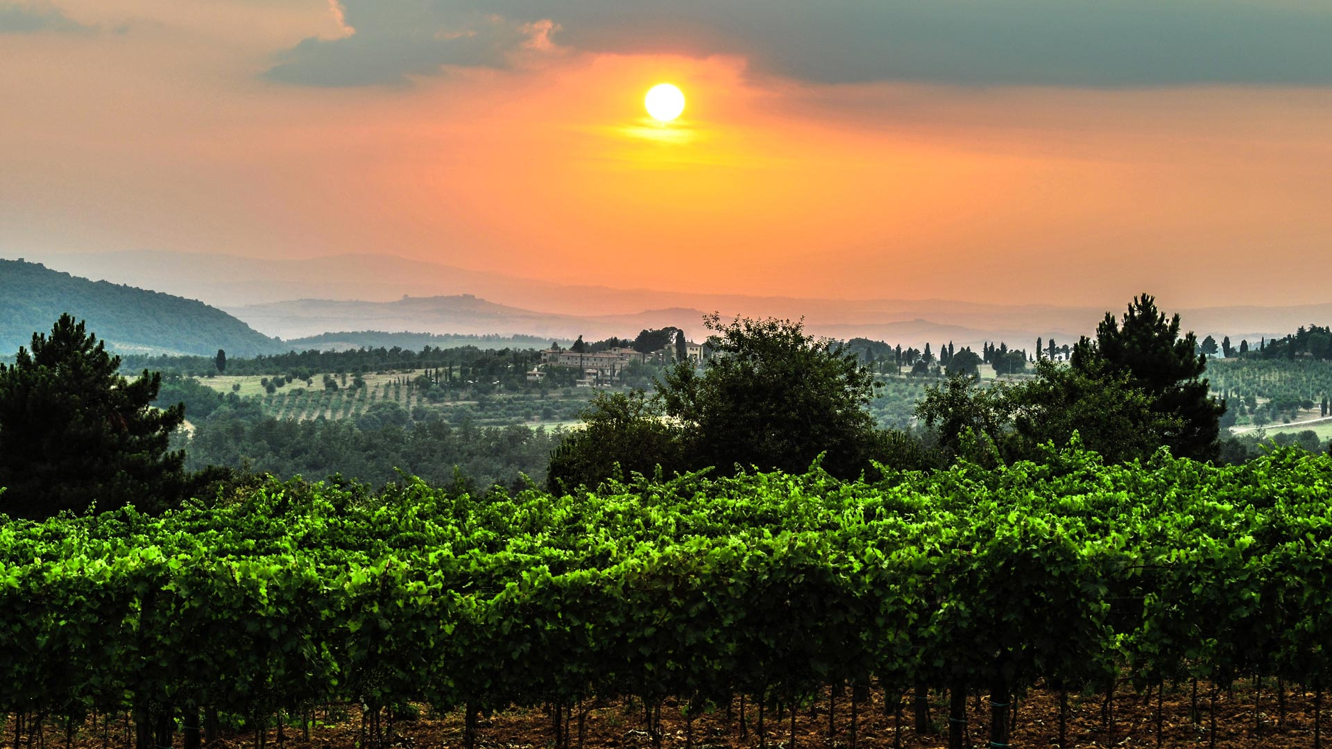 Copy of A beautiful sunset over our lush vines
