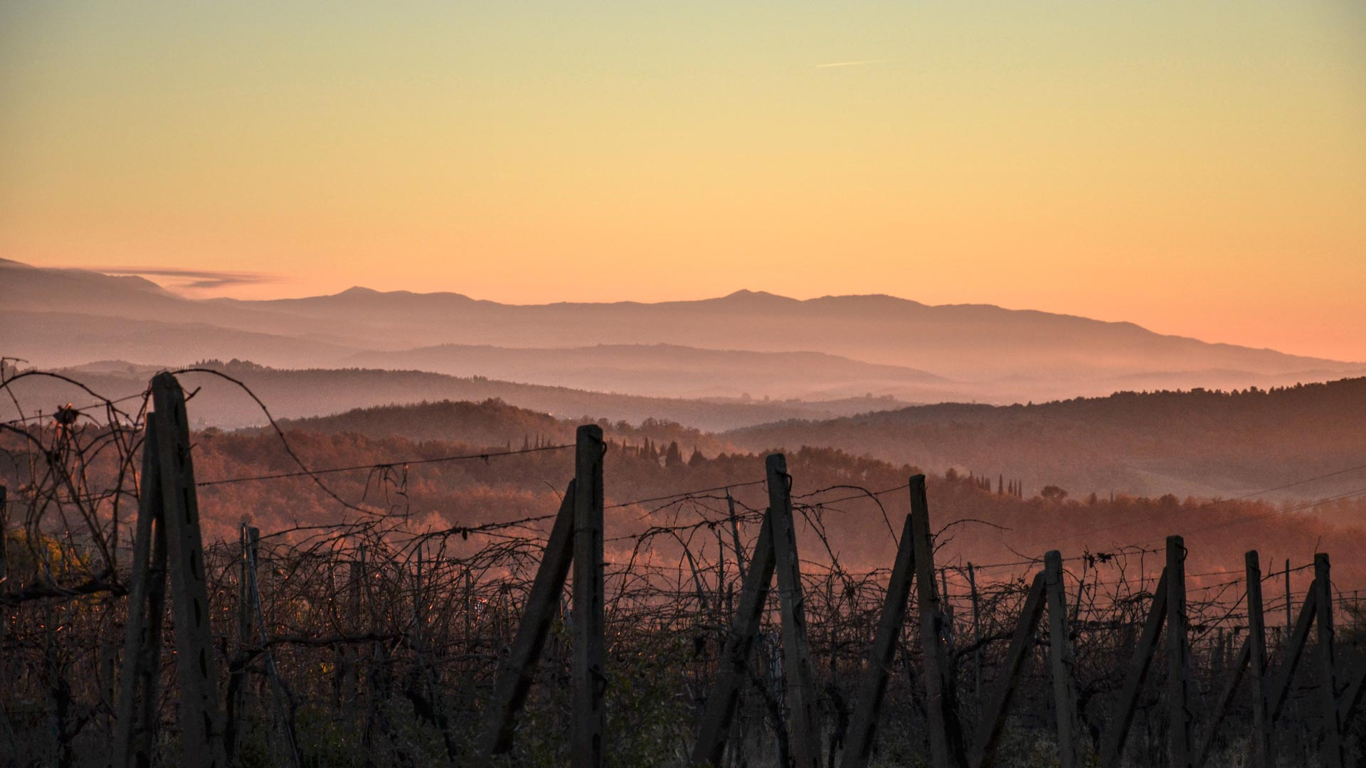 Copy of Sunset settles over our vineyards