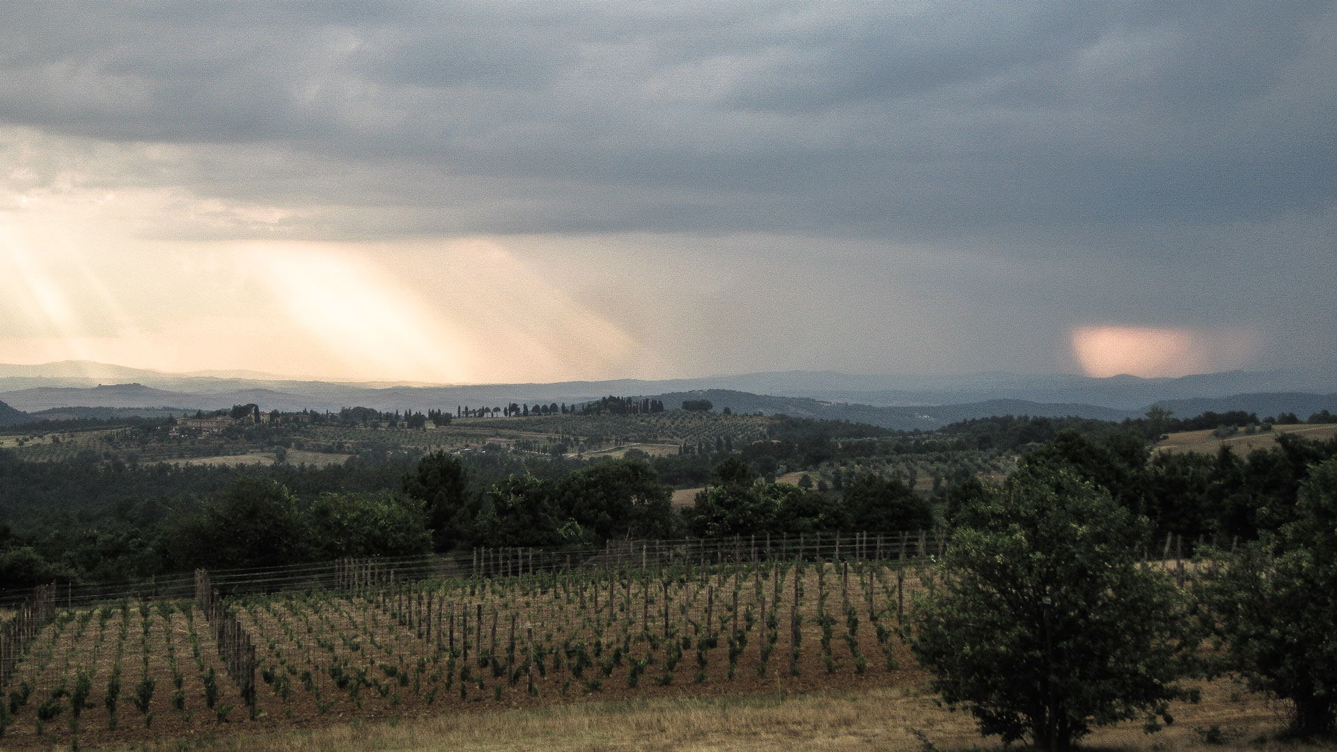 Copy of Winter sunset over our vineyards