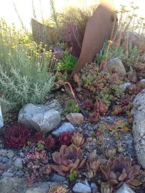 - SUKKULENTENSukkulente Pflanzen speichern Wasser in ihren dickfleischigen Blättern und überstehen so lange Trockenperioden. Sie sind also auf besondere Boden- und Klimaverhältnisse spezialisiert.