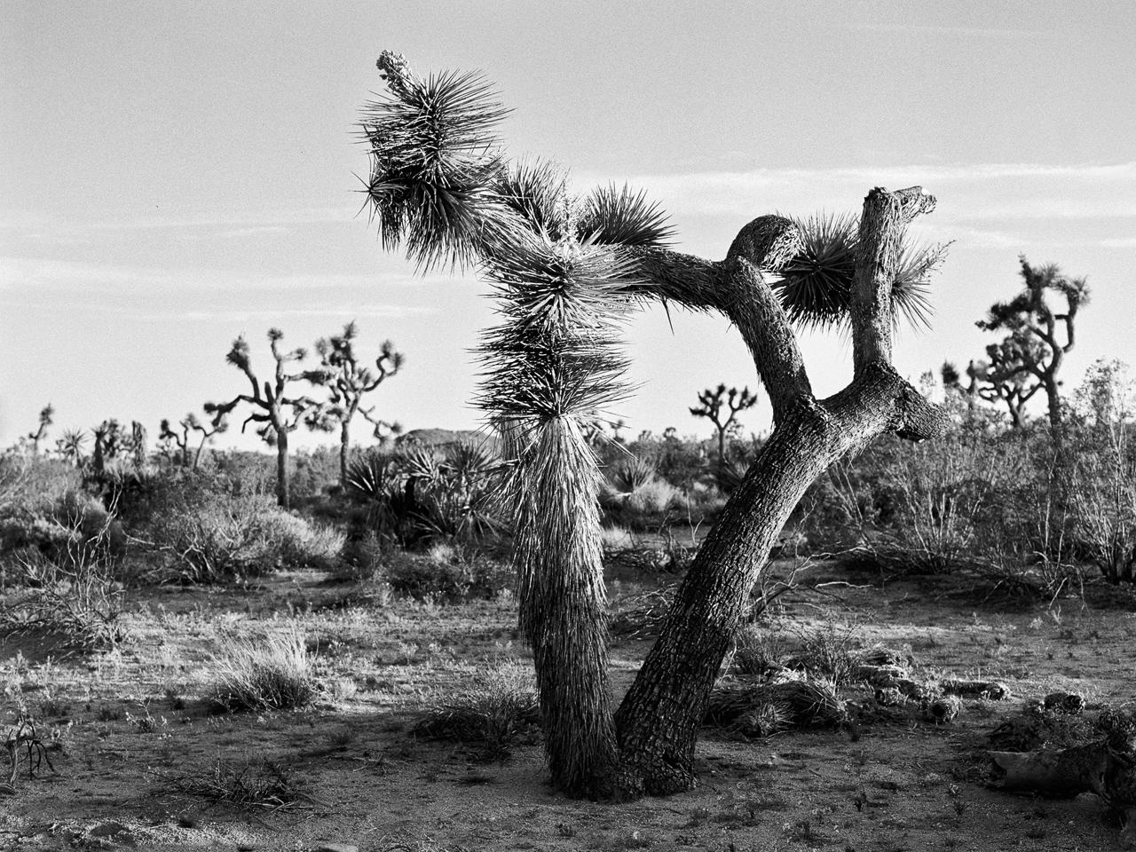 California_2016_Kodak_Tri-x_5_4.jpg