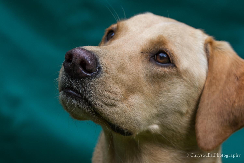DogTrainingck20160820-CKIMG_3669.jpg