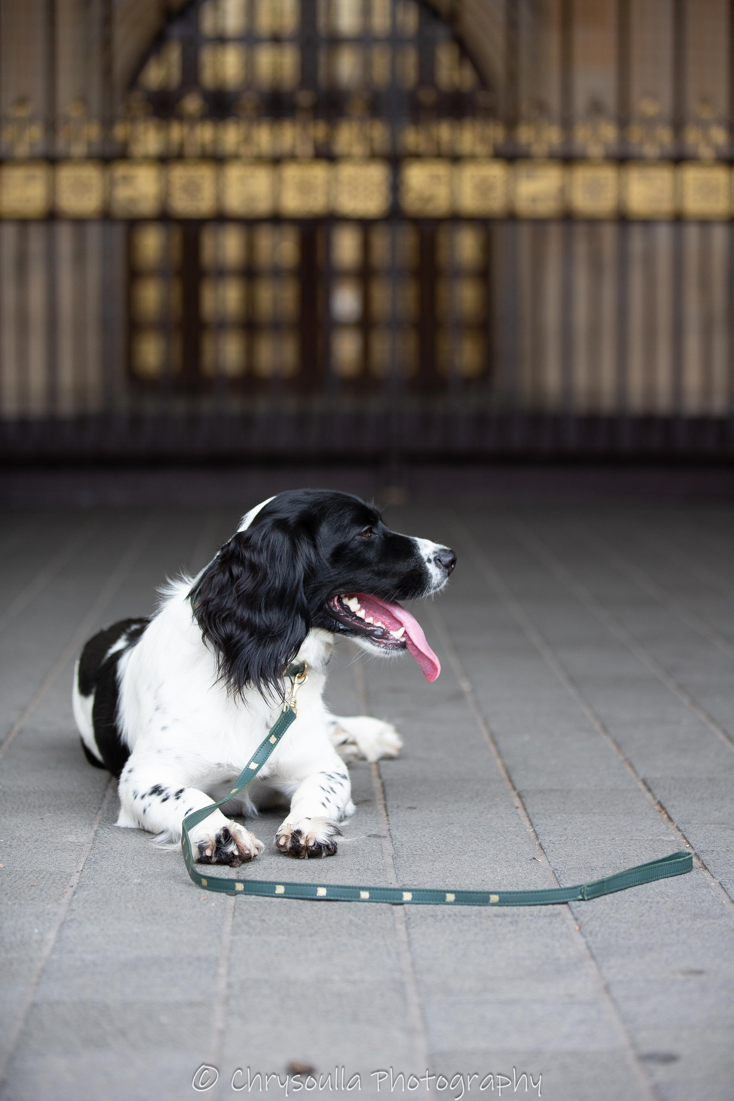 20190718 Westminster Dog Johnny -34310.jpg