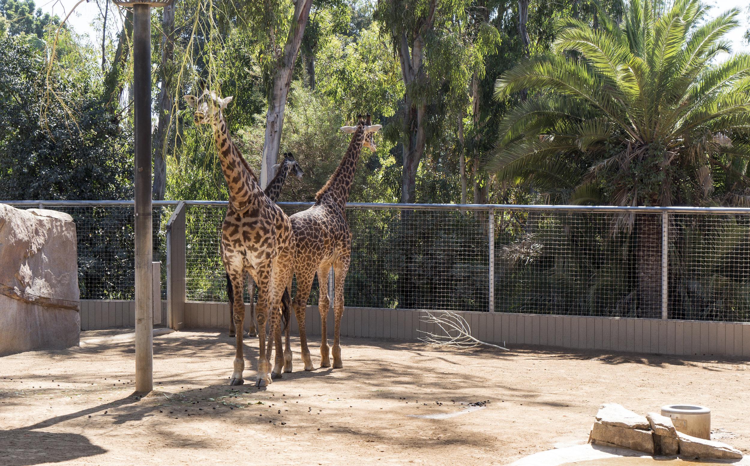 San Diego Zoo21 copy.jpg