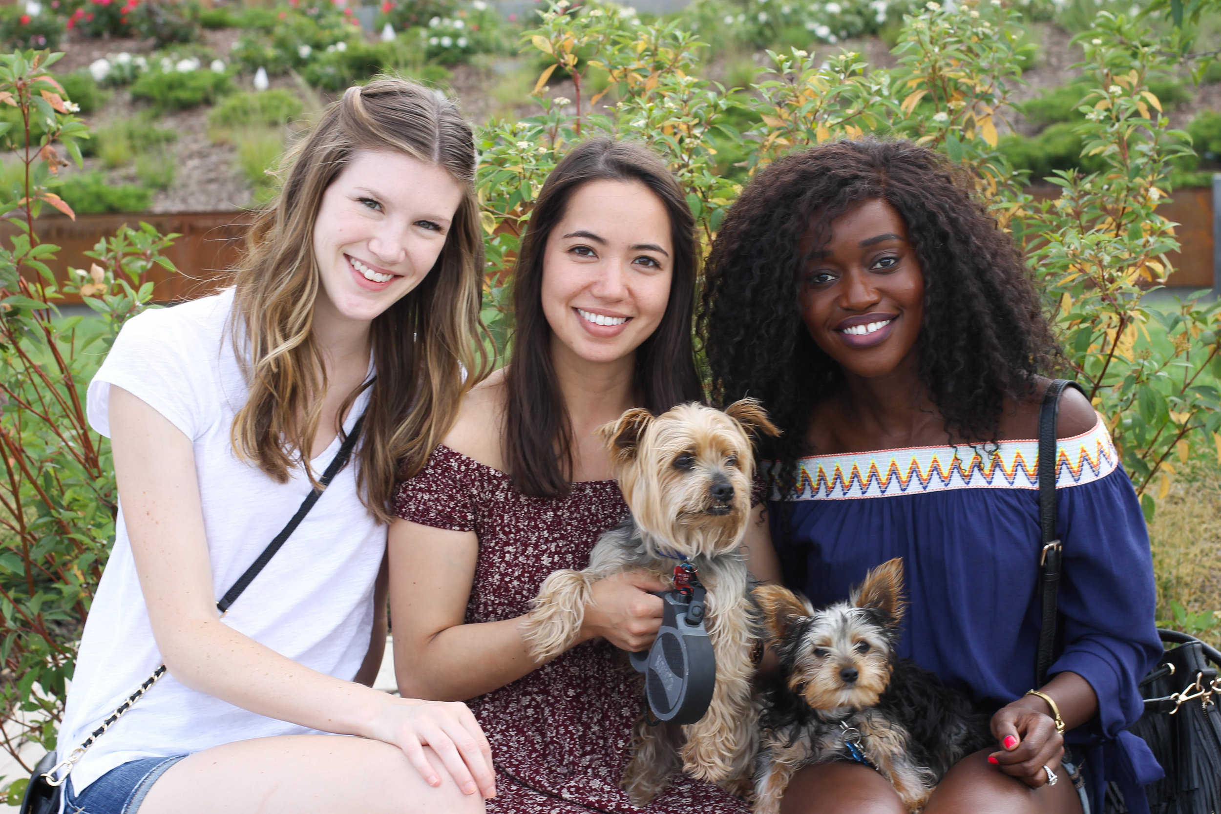 Melanie, Catie, and Lulu (plus Harry and Tyson), from left to right