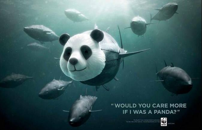Bluefish Tuna sure don't look as cute as Pandas, but they are endangered. Let's give them equal attention. Ogilvy & Mather creates this wonderful ad copy asking 'Would you care more, if I was a Panda?'