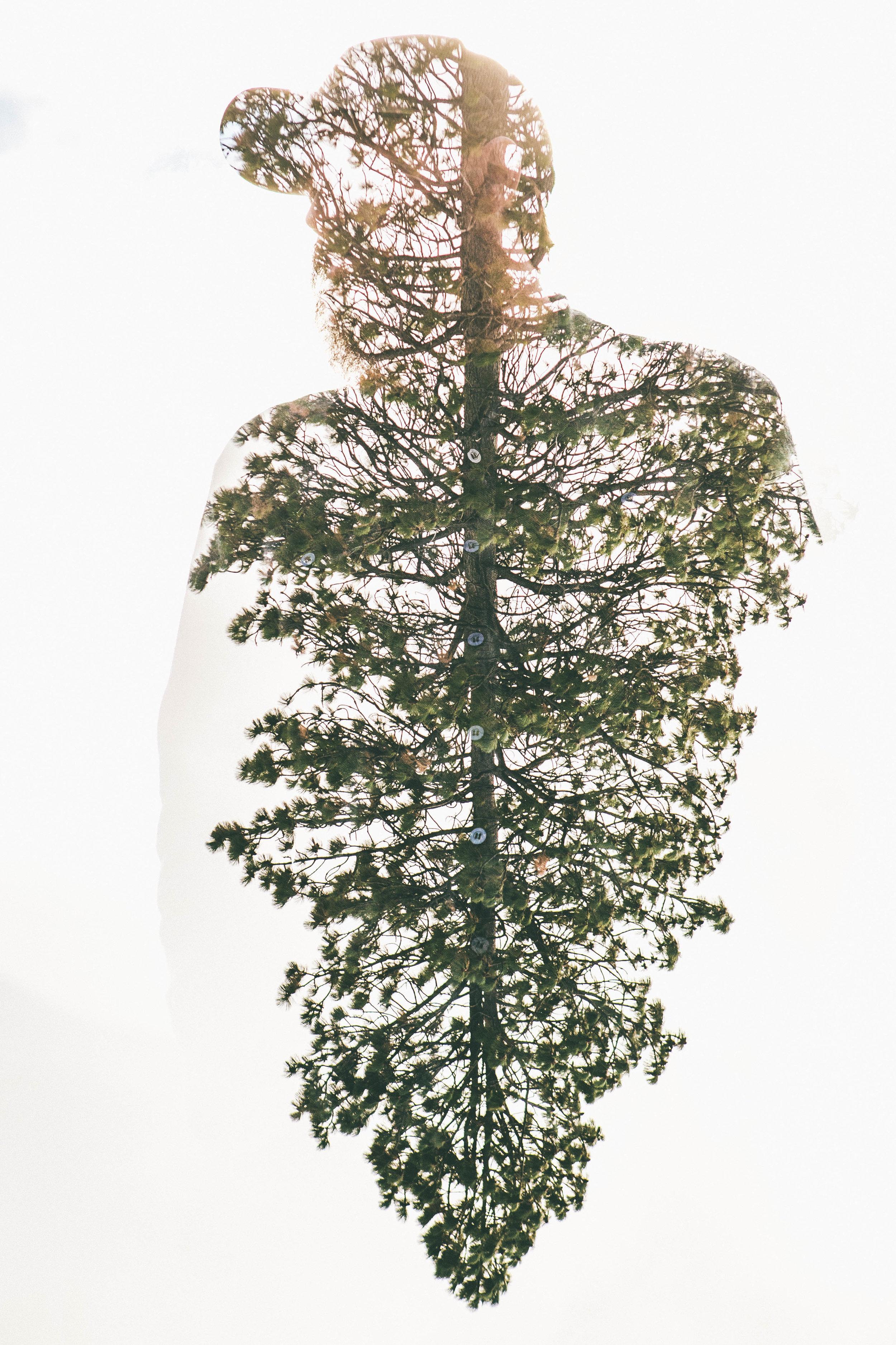 Comrades Double Expo Tree (2 of 3).jpg