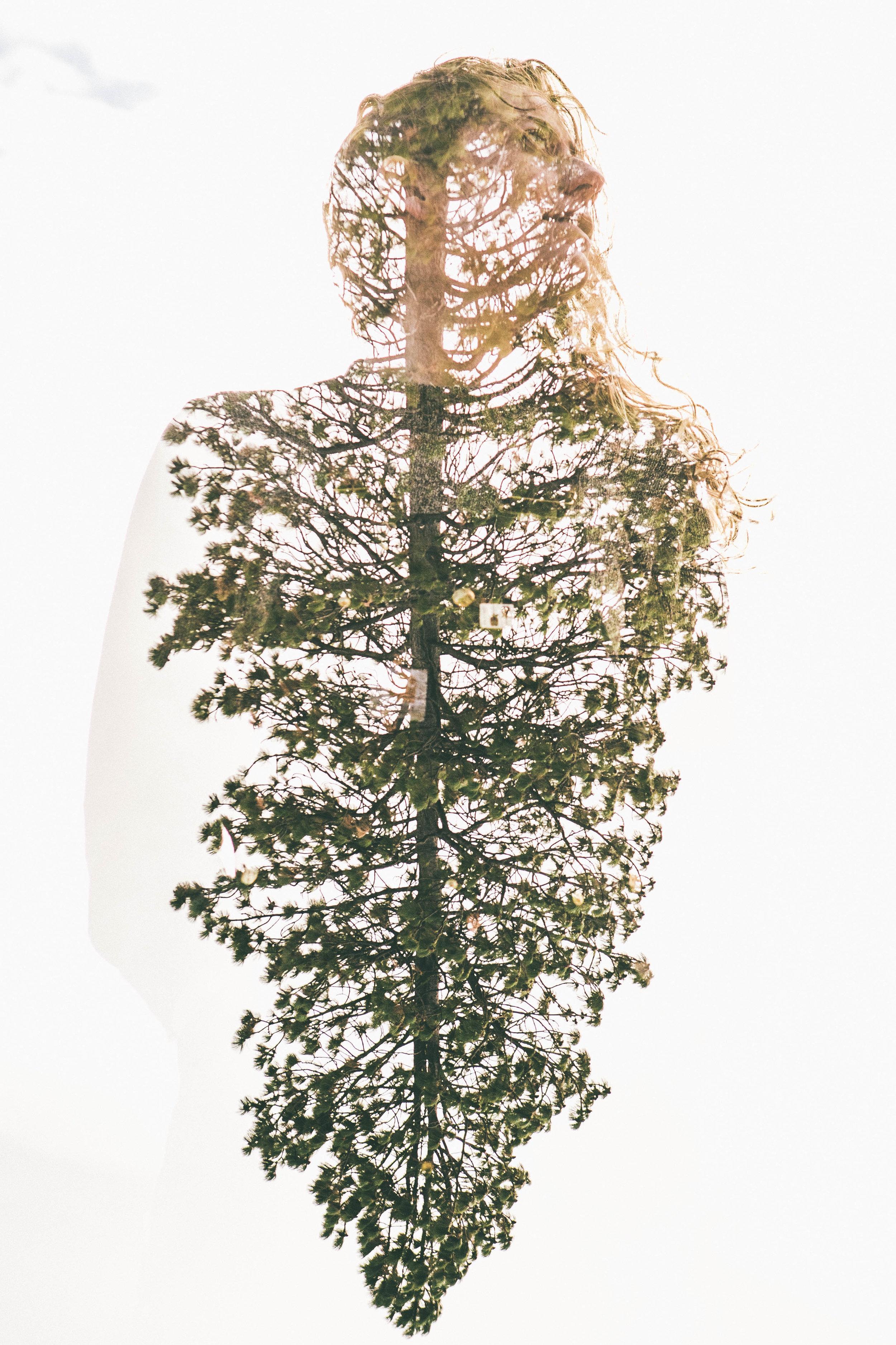 Comrades Double Expo Tree (3 of 3).jpg