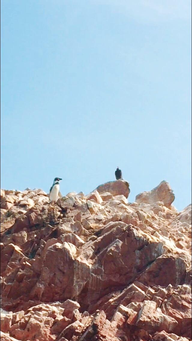 Islas Ballestas #paracas #lima #peru #viajes