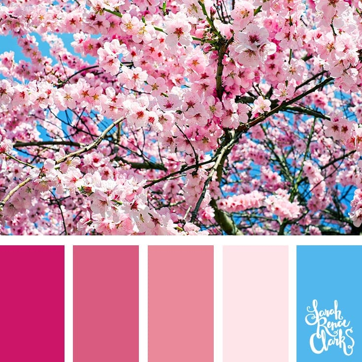 Color-palette-211-pink-flowers.jpg