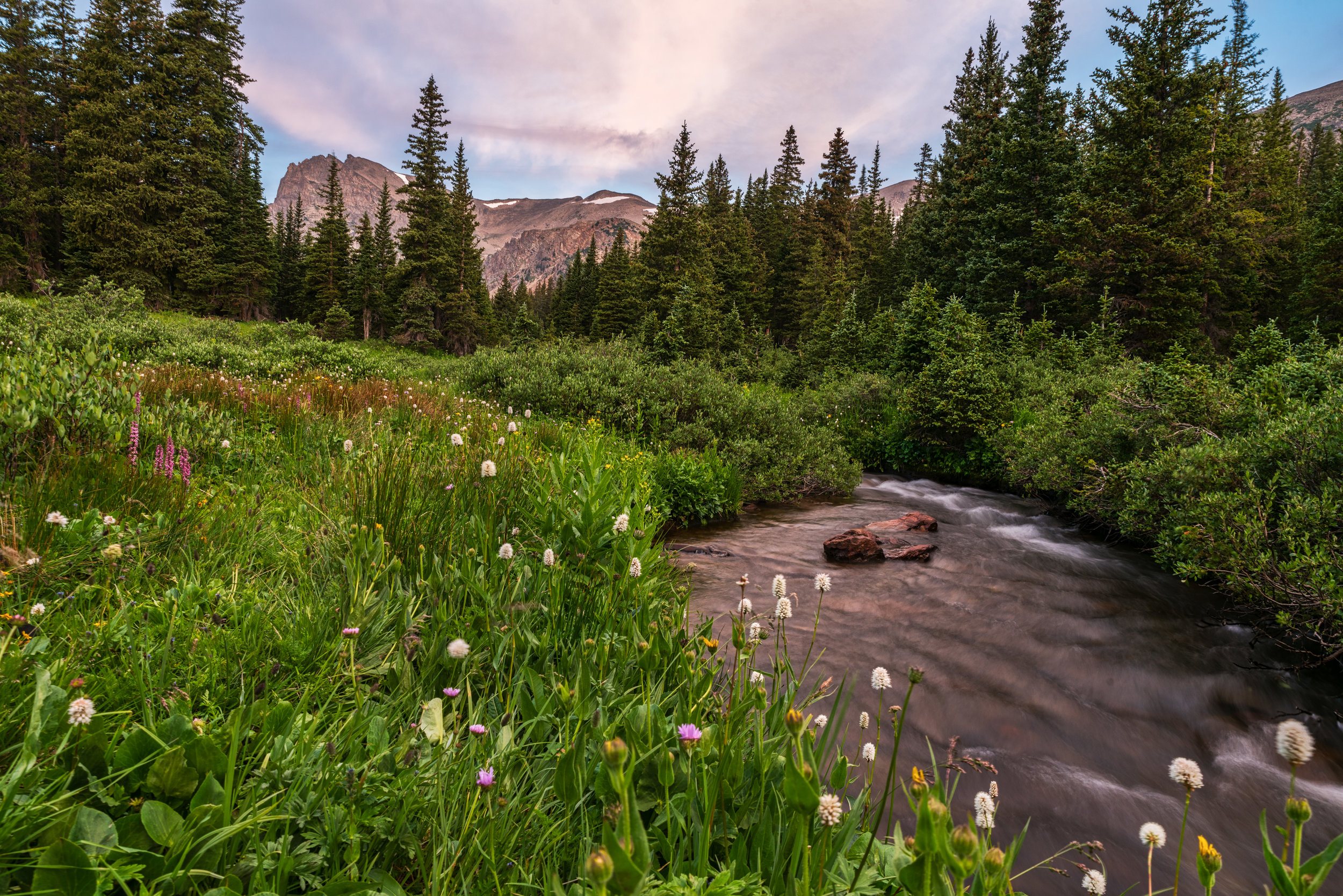Wildflowers beside the stream flowing out of Lake Isabelle. First light was beginning to illuminate The Indian Peaks in the background.