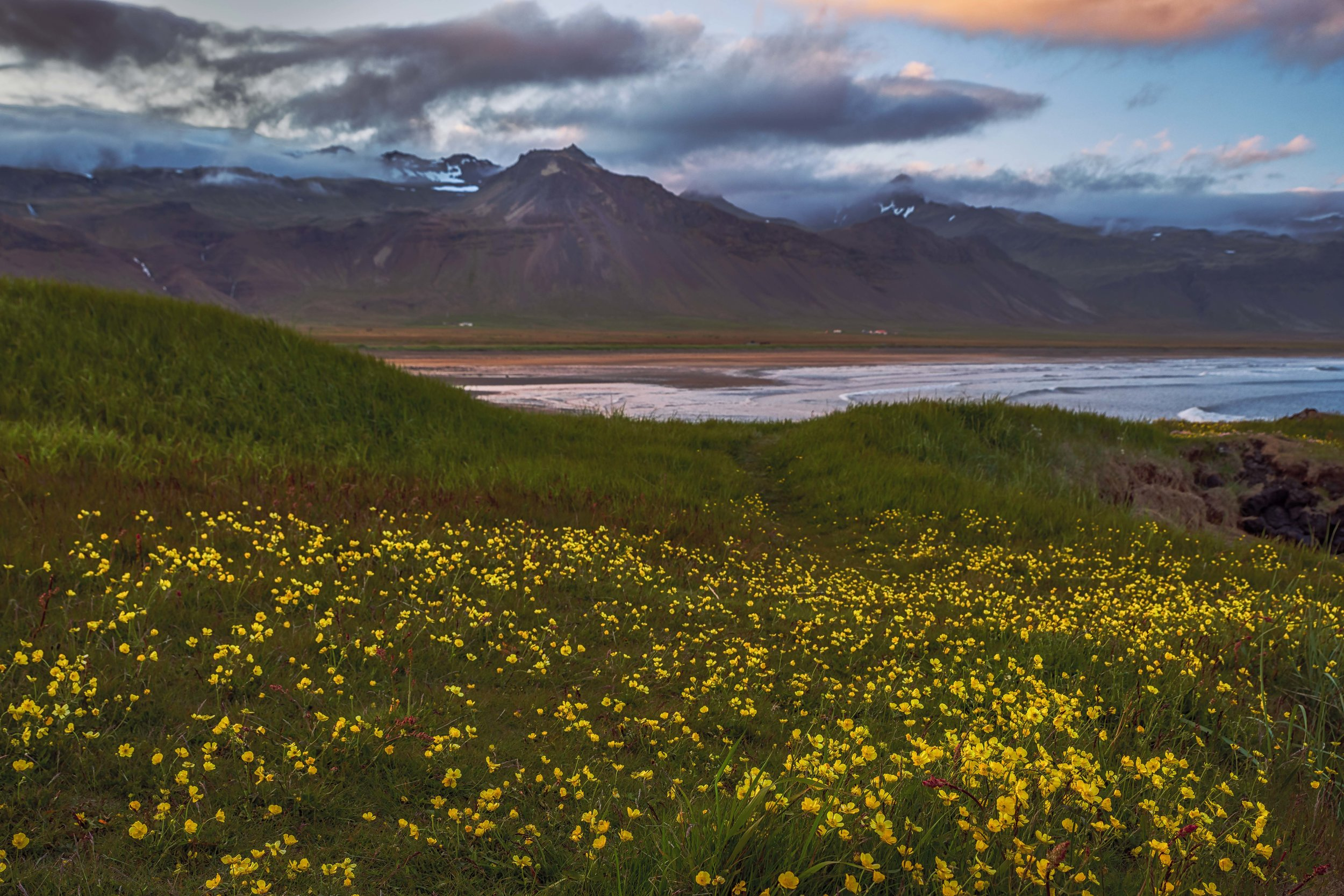 Wildflowers, sea, mountains and clouds