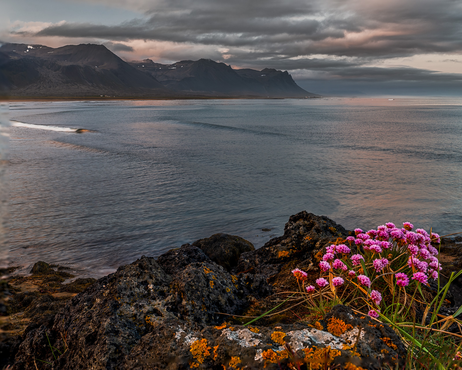 Colorful wildflowers along The Snaefellsnes Peninsula