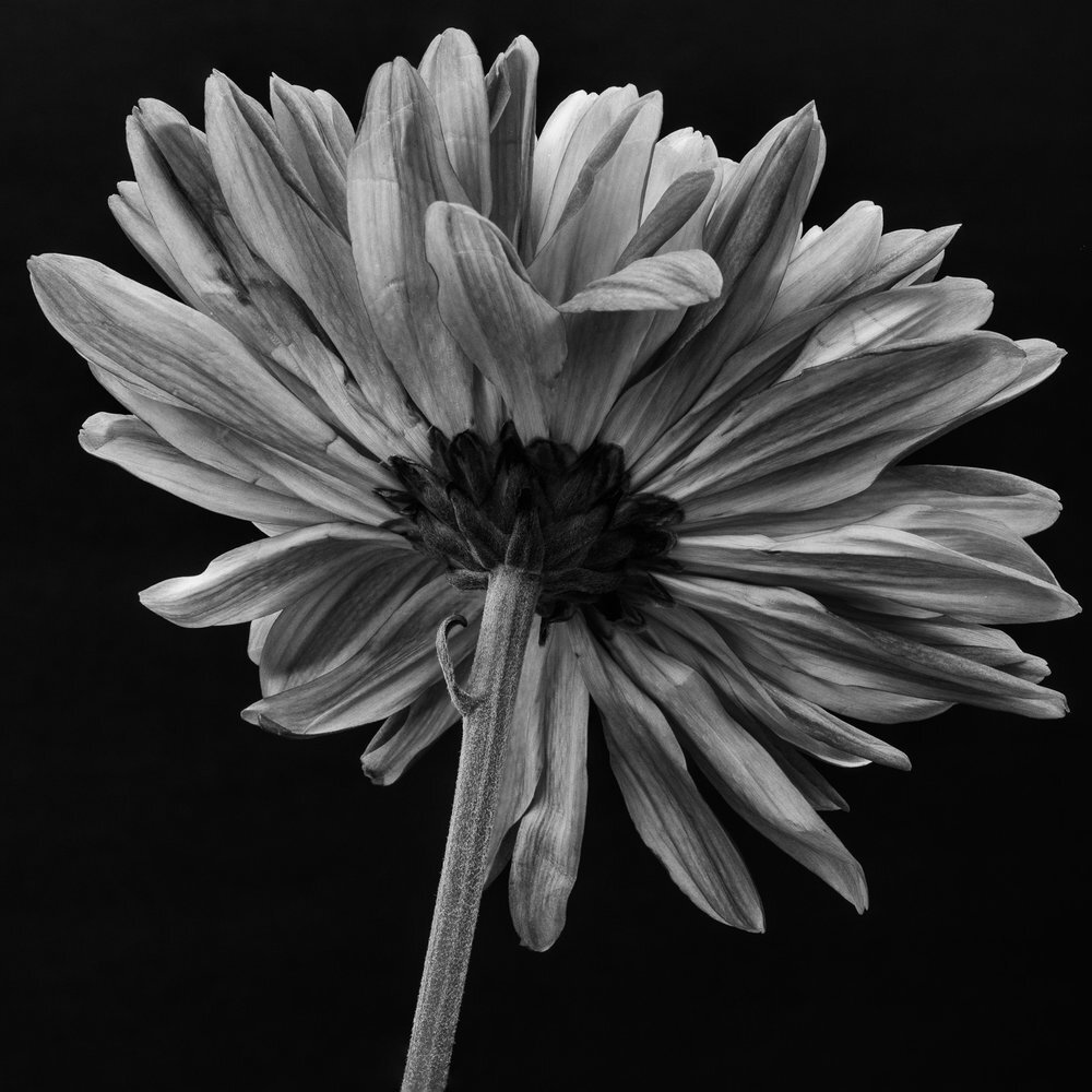 Black and White -