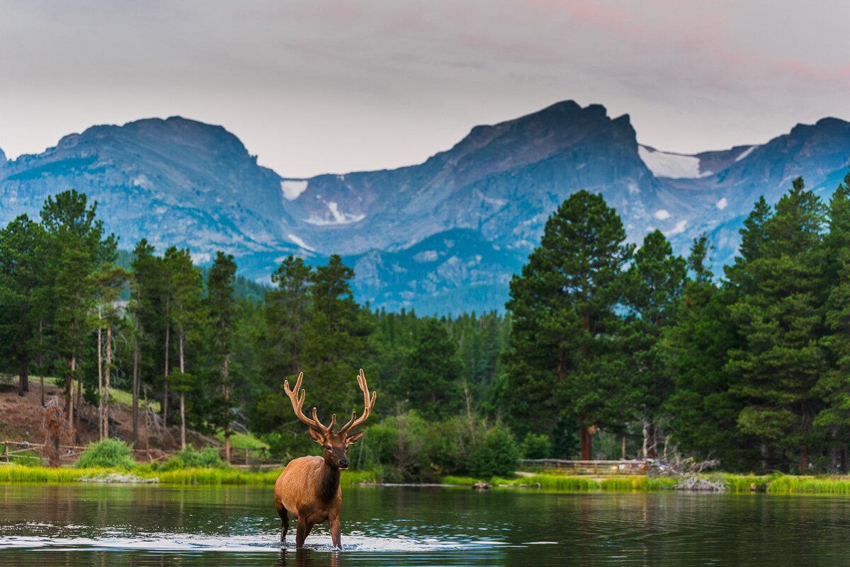 Wildlife and Animals -