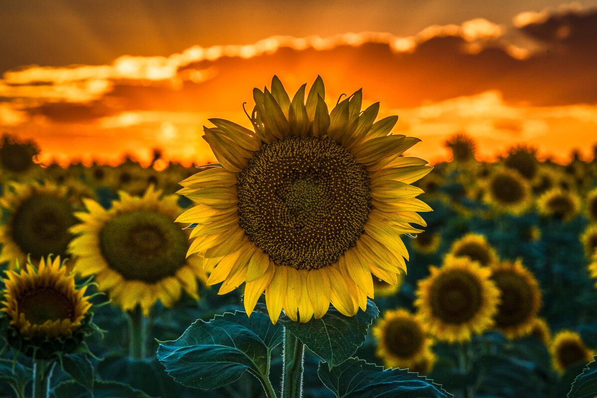Macro and Flowers -