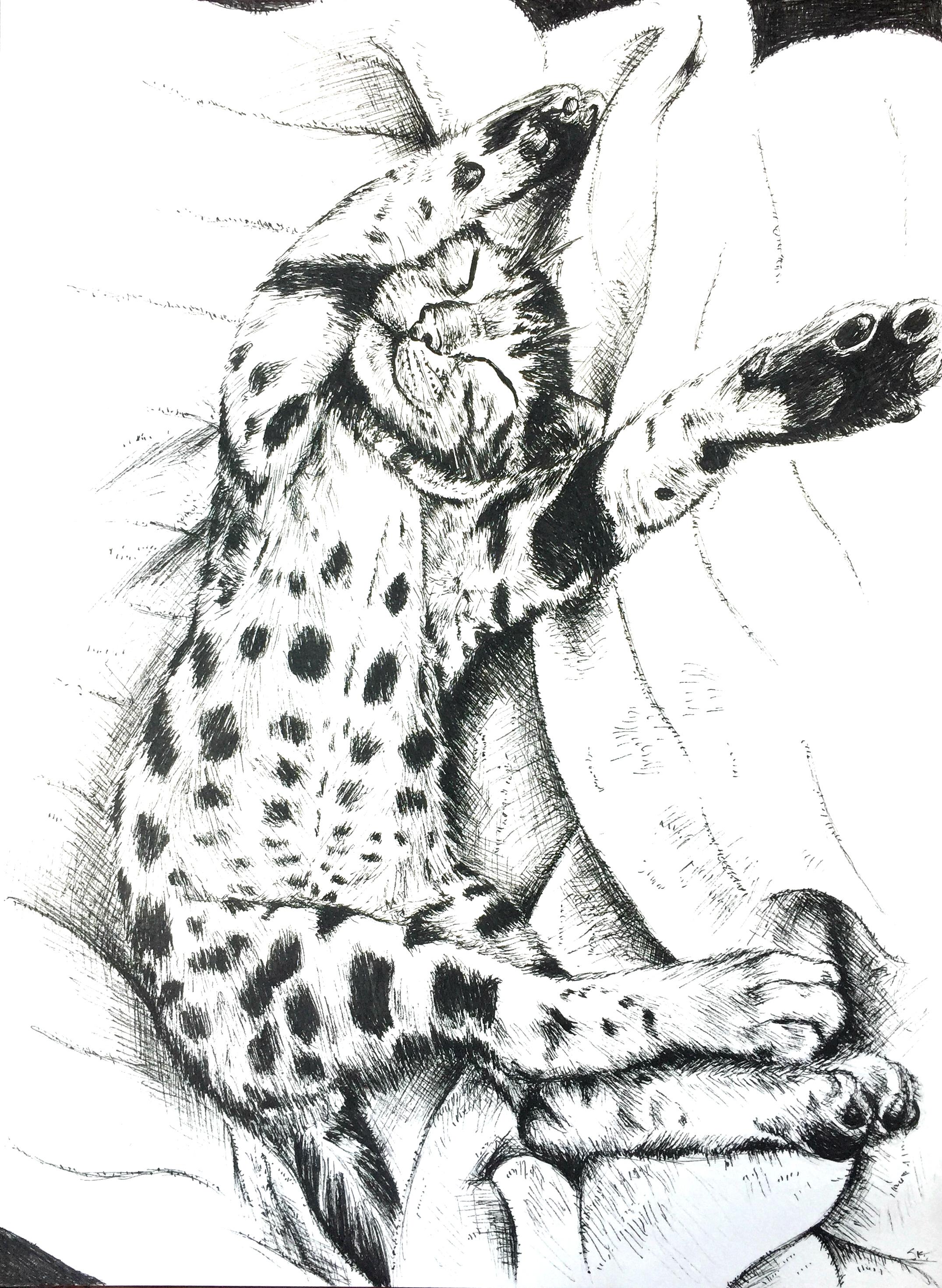 baileycat1.jpg