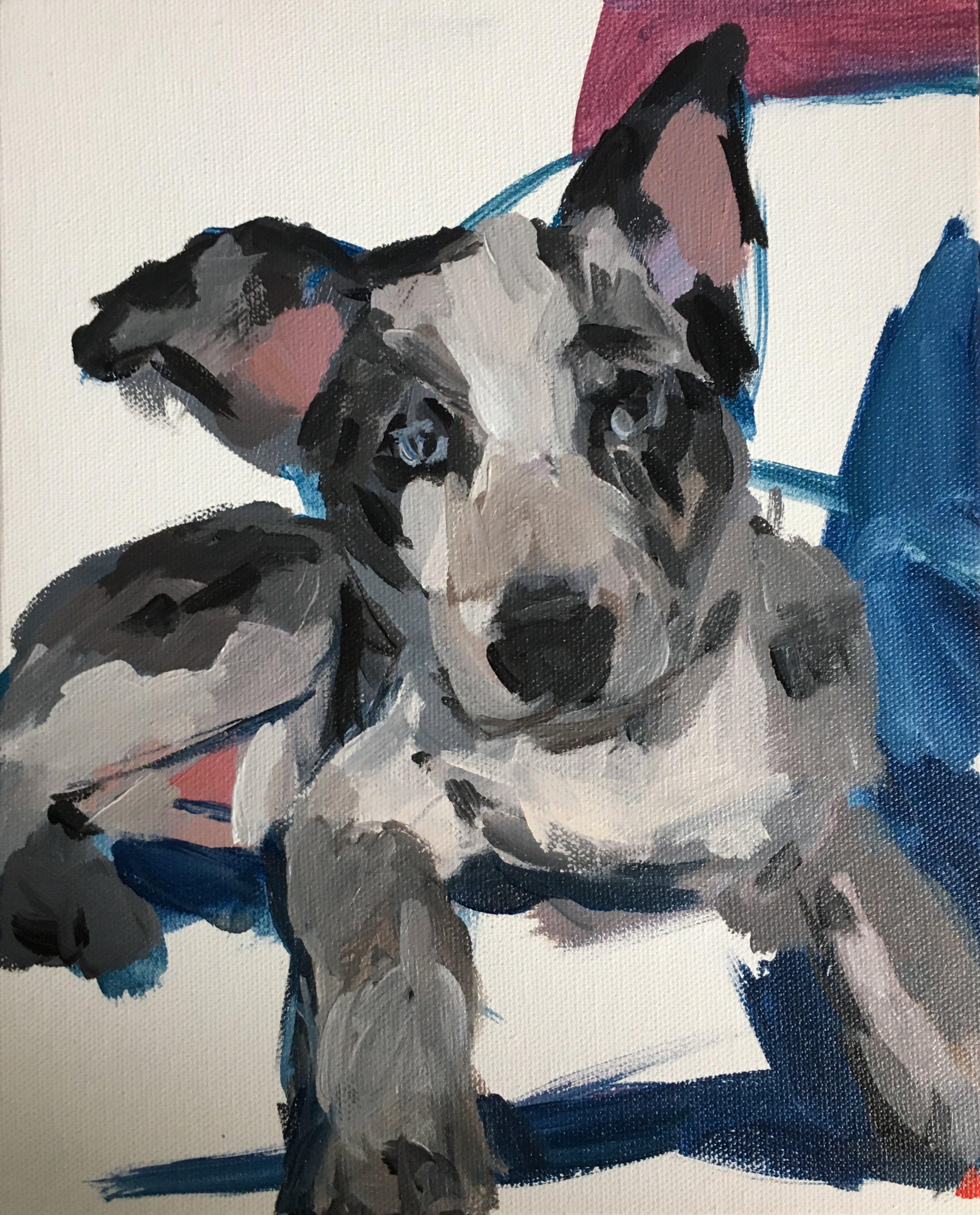 Gray Puppy.jpg