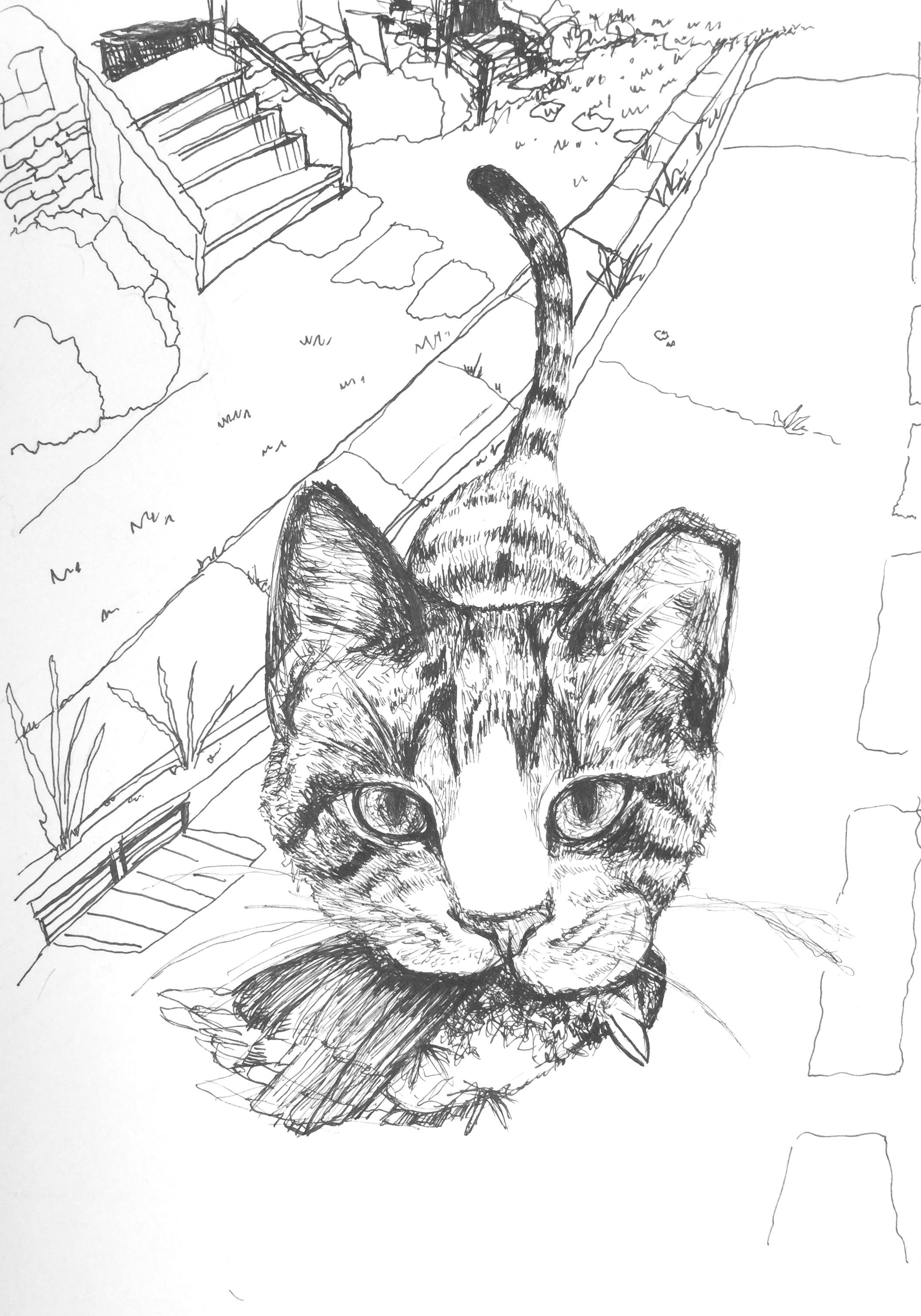 Ear Tipped Cat V1.jpg