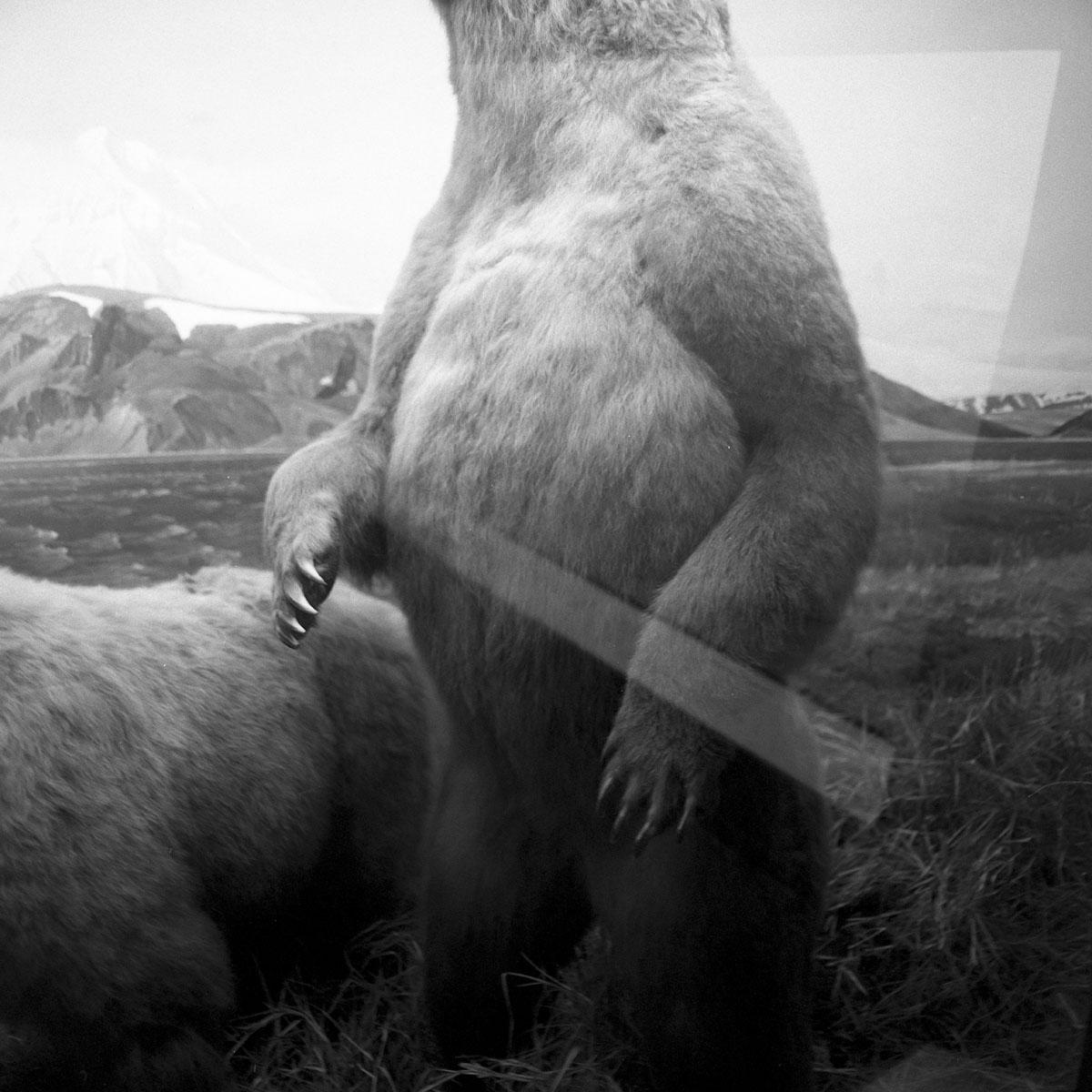 Ursus+Arctos-Henrikson.jpg