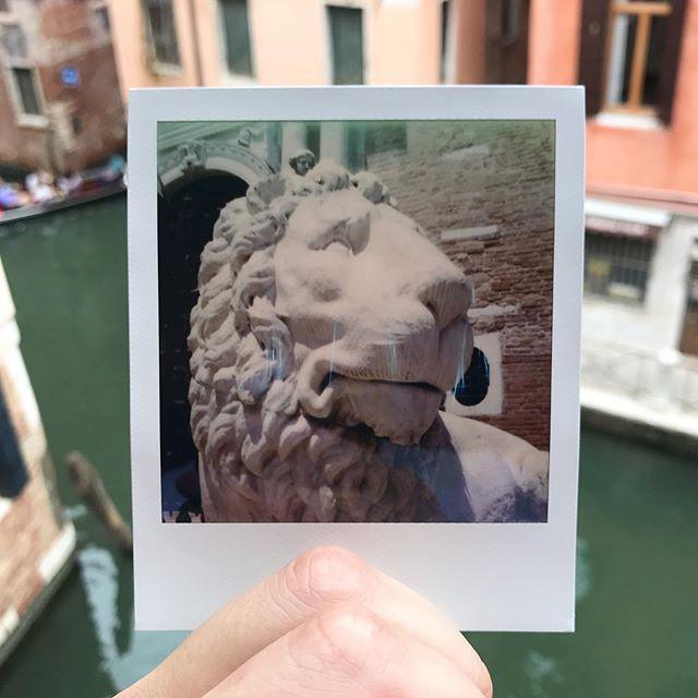 Golden Lions here in Venice