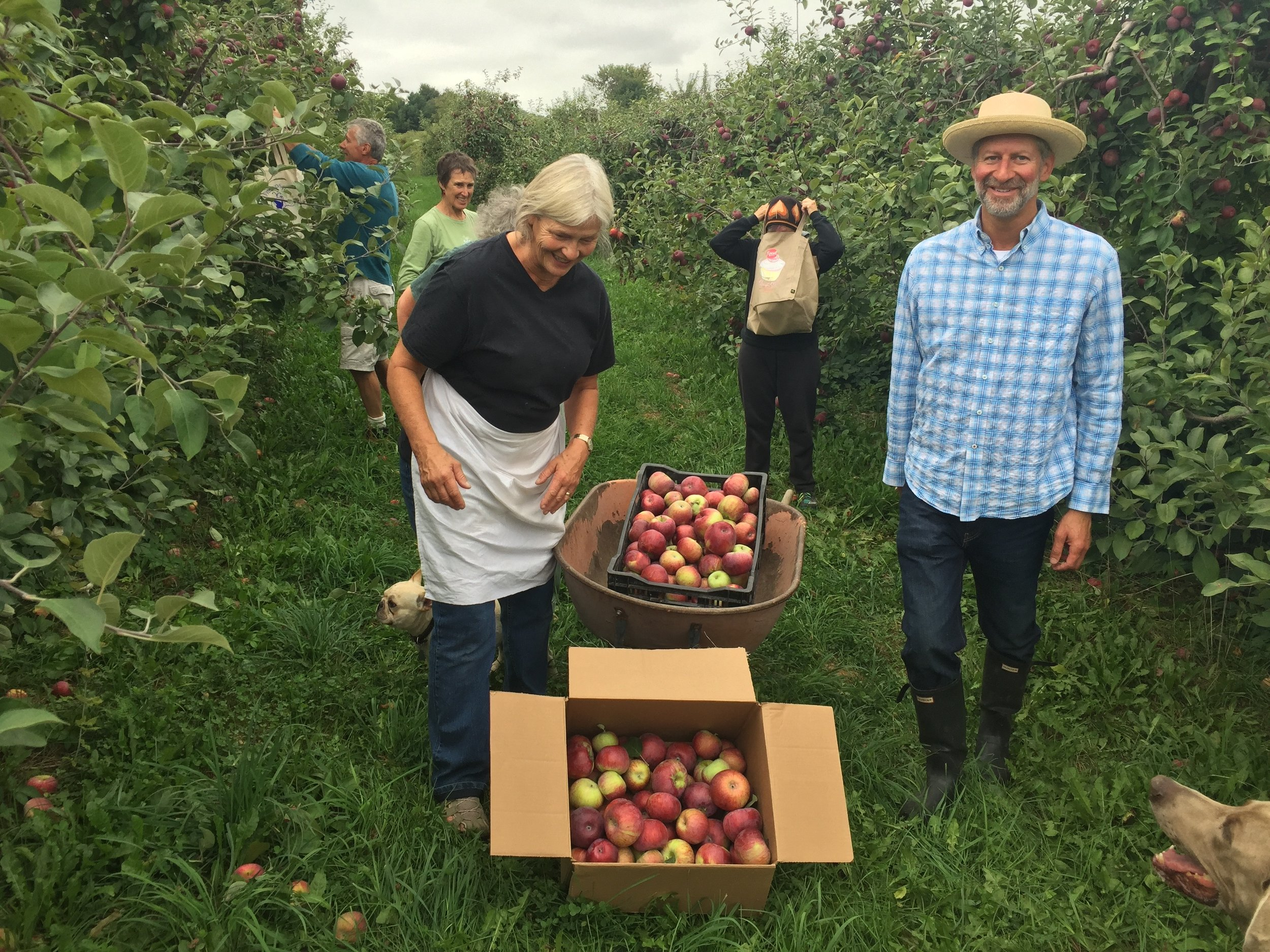 Gleaning for Hudson Valley food pantries....