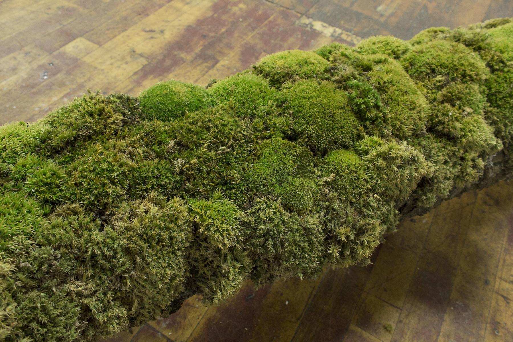 moss detail.jpg