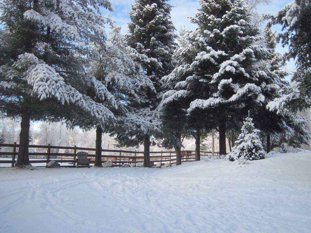 hillside winter1.JPG